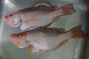 2 Red Snappers in a Teka Sink