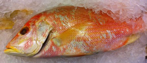Anothe Red Snapper on Ice