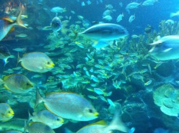 Bunch of tropical coral fish